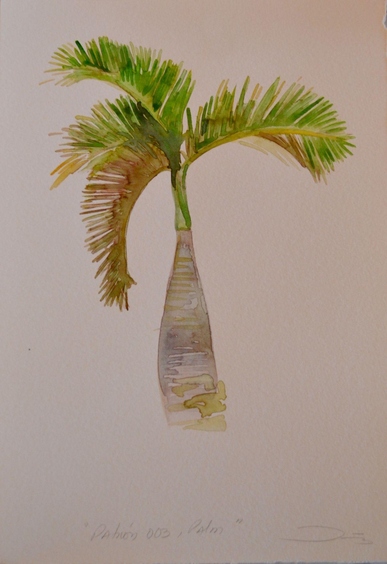 Patrón 003, Palm