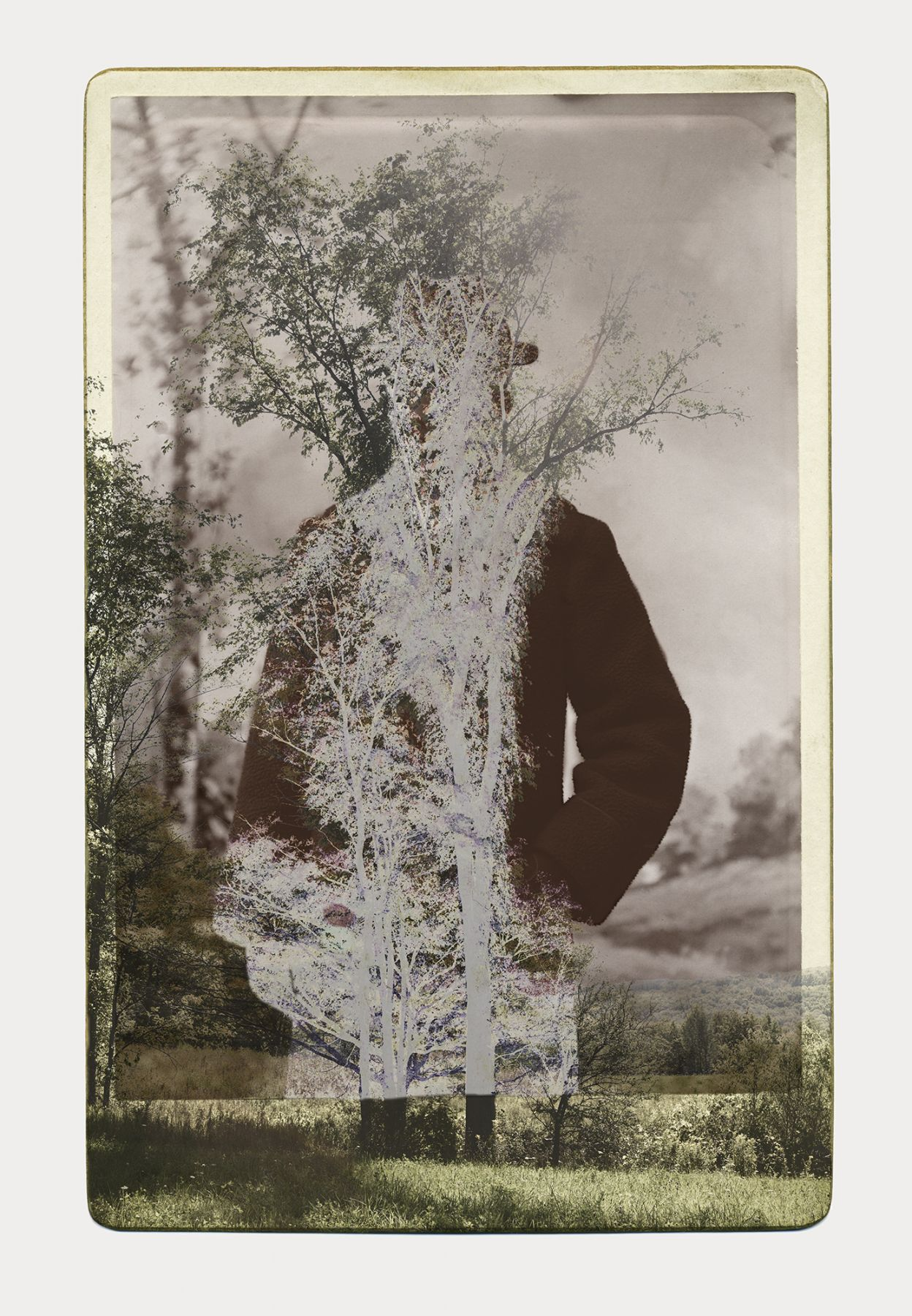SARA ANGELUCCI | ARBORETUM (MAN/ELM) | PIGMENT PRINT ON ARCHIVAL PAPER | 24 X 34 INCHES | 2016