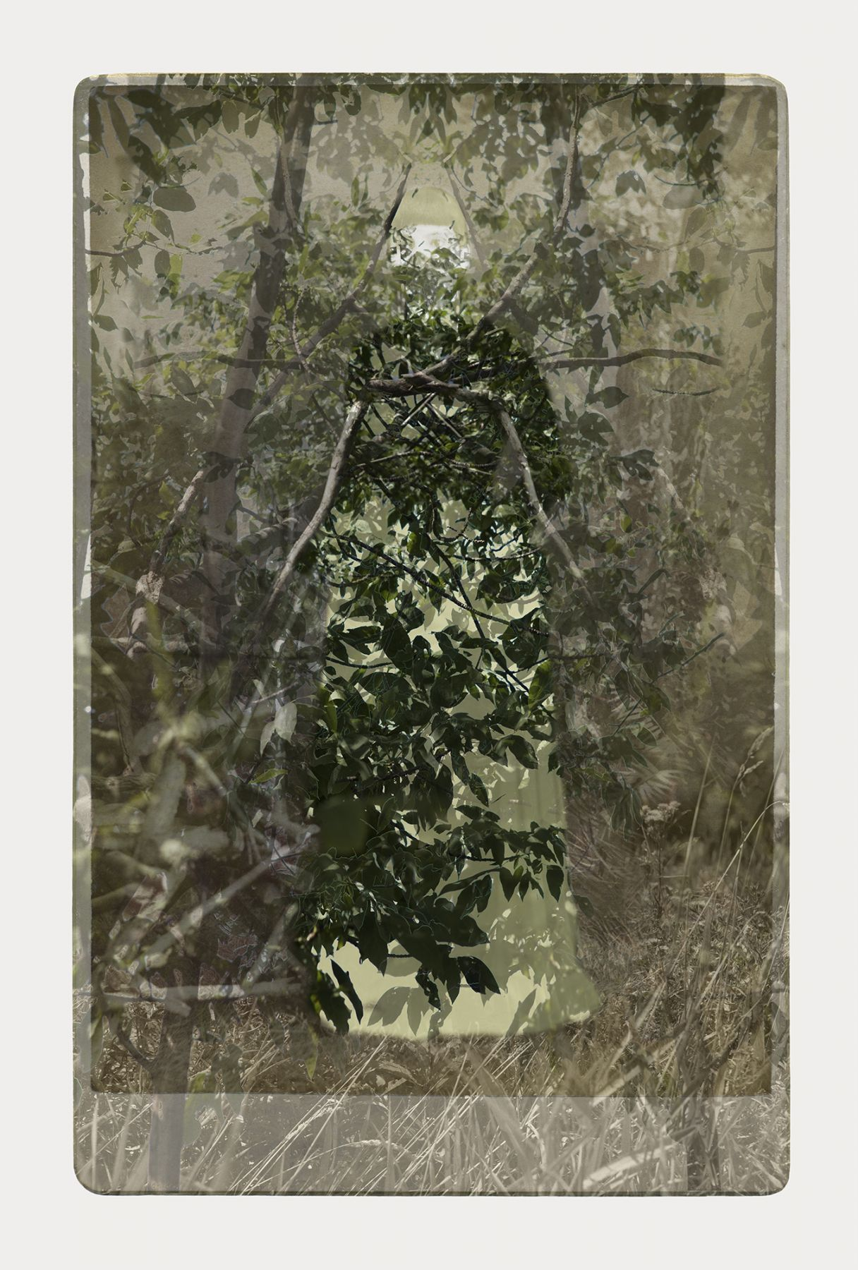 SARA ANGELUCCI | ARBORETUM (WOMAN/ASH) | PIGMENT PRINT ON ARCHIVAL PAPER | 24 X 34 INCHES | 2016