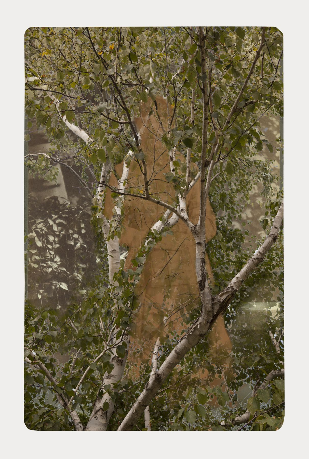 SARA ANGELUCCI | ARBORETUM (WOMAN/WHITE BIRCH) | PIGMENT PRINT ON ARCHIVAL PAPER | 24 X 34 INCHES | 2016