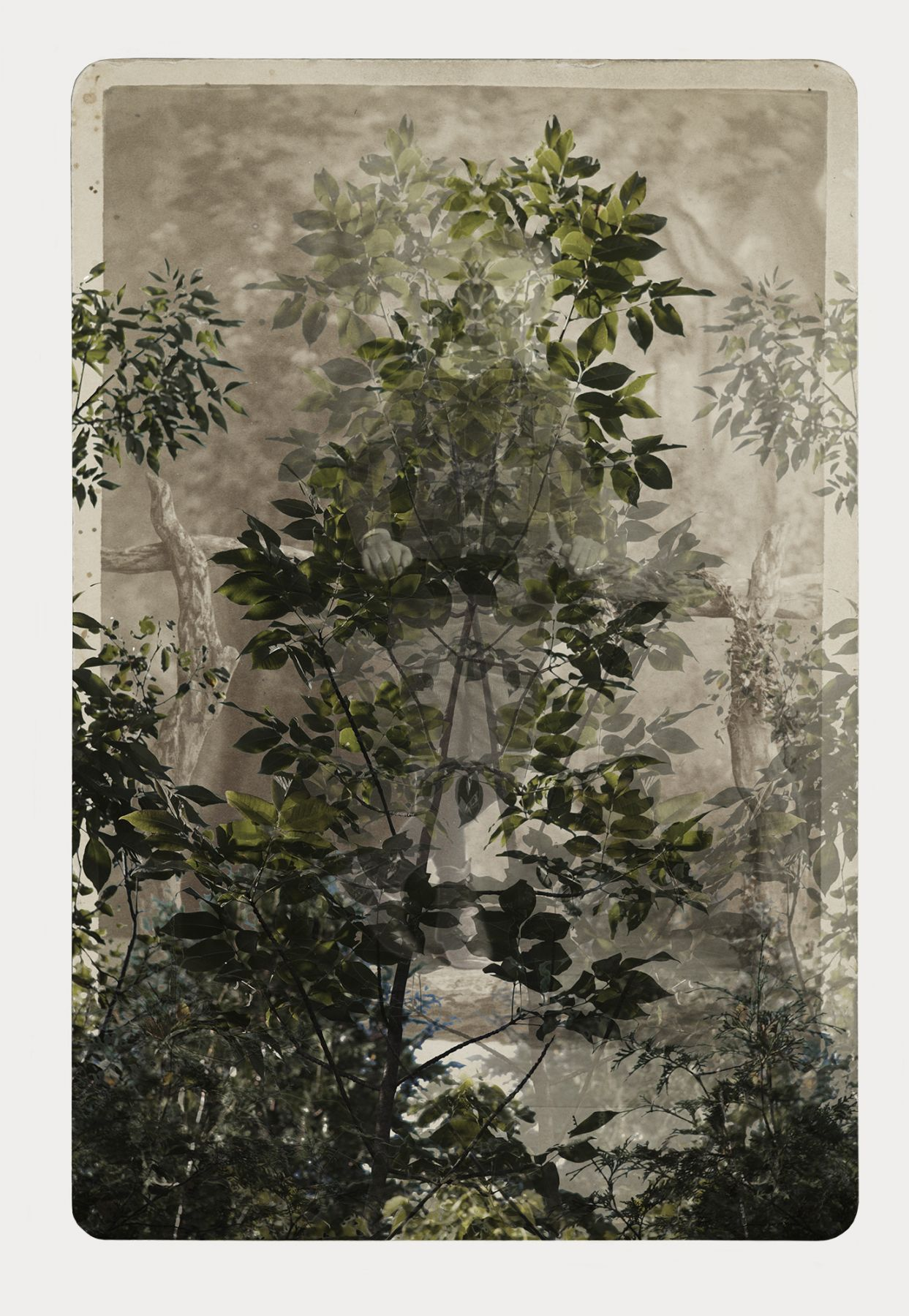 SARA ANGELUCCI | ARBORETUM (BOY/DOUBLE ASH) | PIGMENT PRINT ON ARCHIVAL PAPER | 31 X 44 INCHES | 2016
