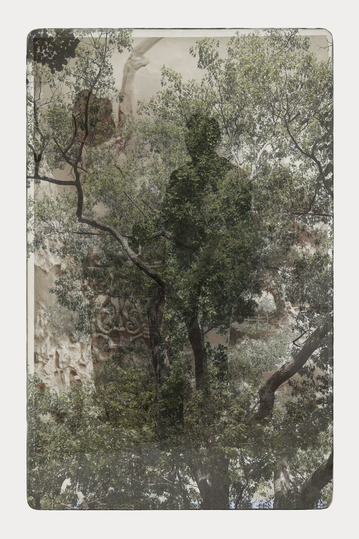 SARA ANGELUCCI | ARBORETUM (MAN/HAT/OAK) | PIGMENT PRINT ON ARCHIVAL PAPER | 24 X 34 INCHES | 2016
