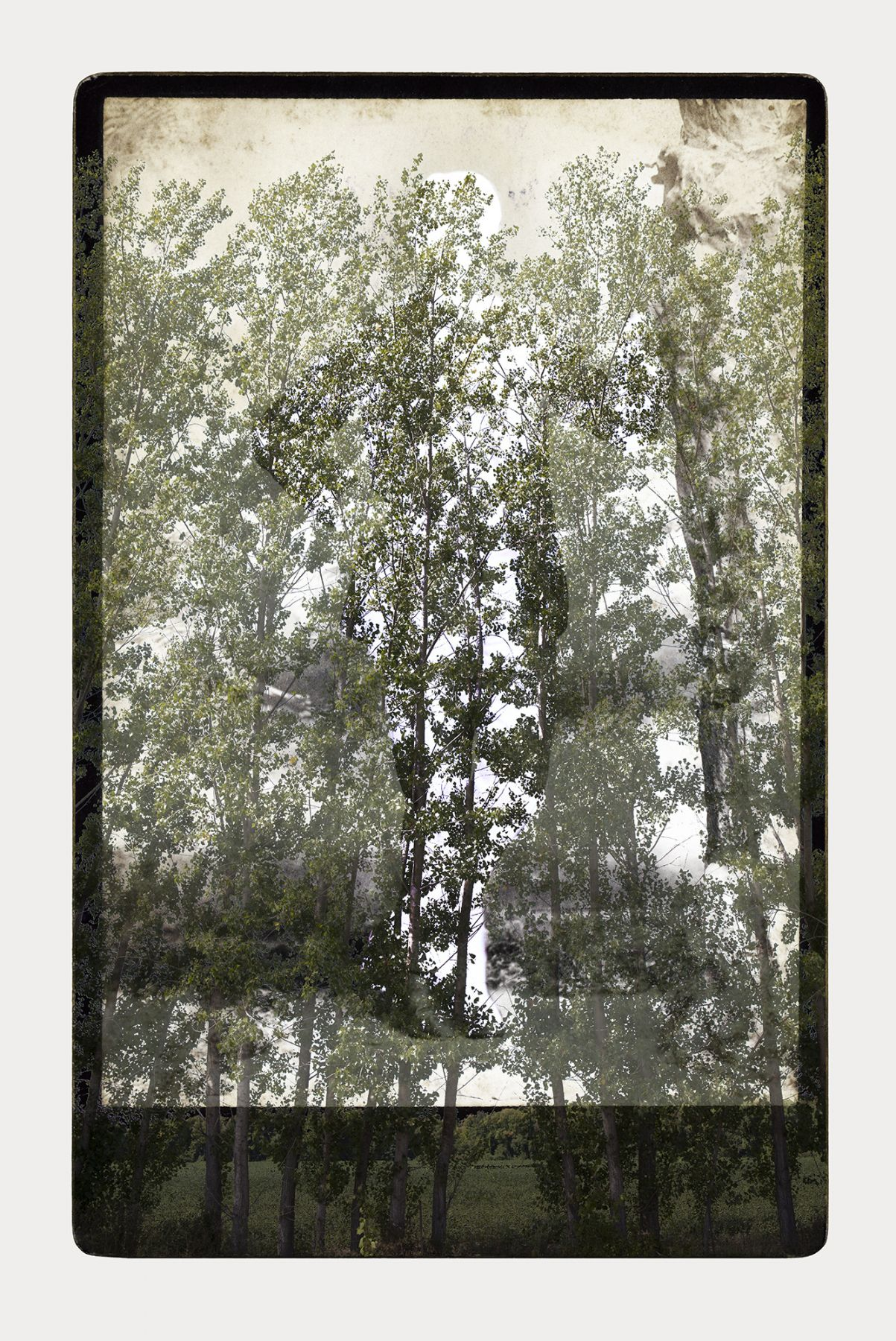 SARA ANGELUCCI | ARBORETUM (MAN/POPLAR) | PIGMENT PRINT ON ARCHIVAL PAPER | 24 X 34 INCHES | 2016