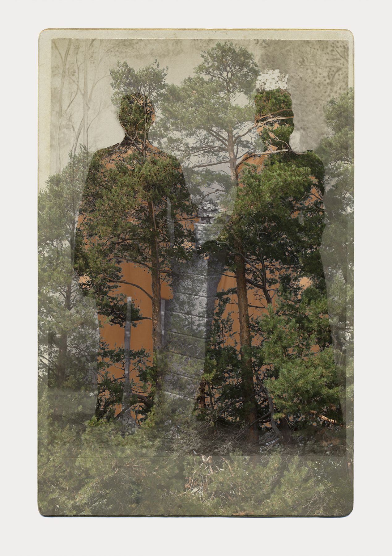 SARA ANGELUCCI | ARBORETUM (MAN/WOMAN/PINES) | PIGMENT PRINT ON ARCHIVAL PAPER | 31 X 44 INCHES | 2016
