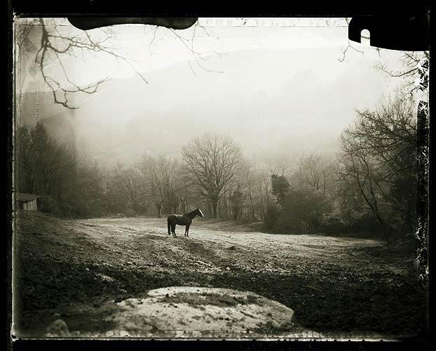 Cavallo all'alba, valle del pavone, toscana (from the Eternita series), 1995-2004