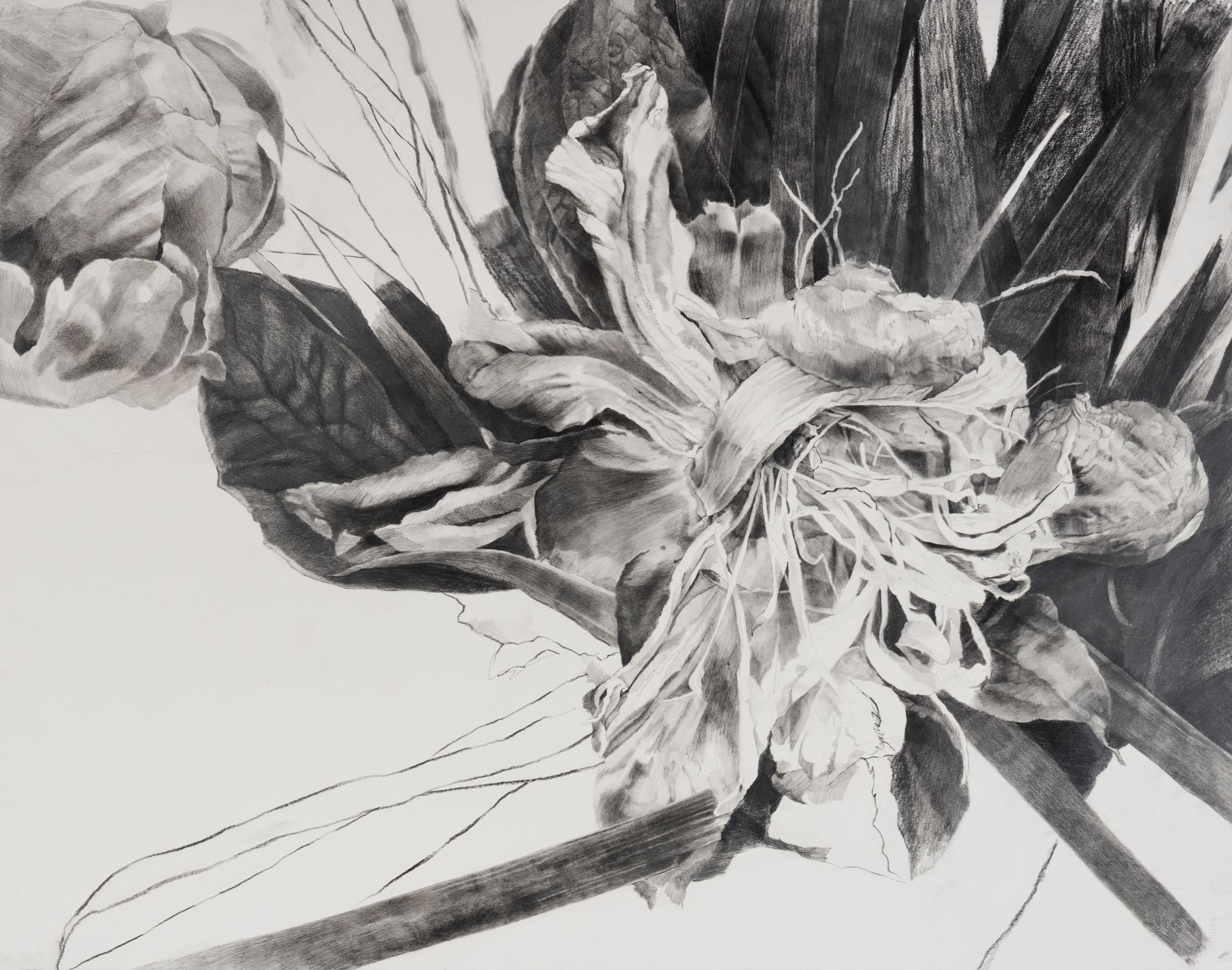 Dead Flowers 2, graphite on paper, 25 3/4 x 32 1/2 in, JR038