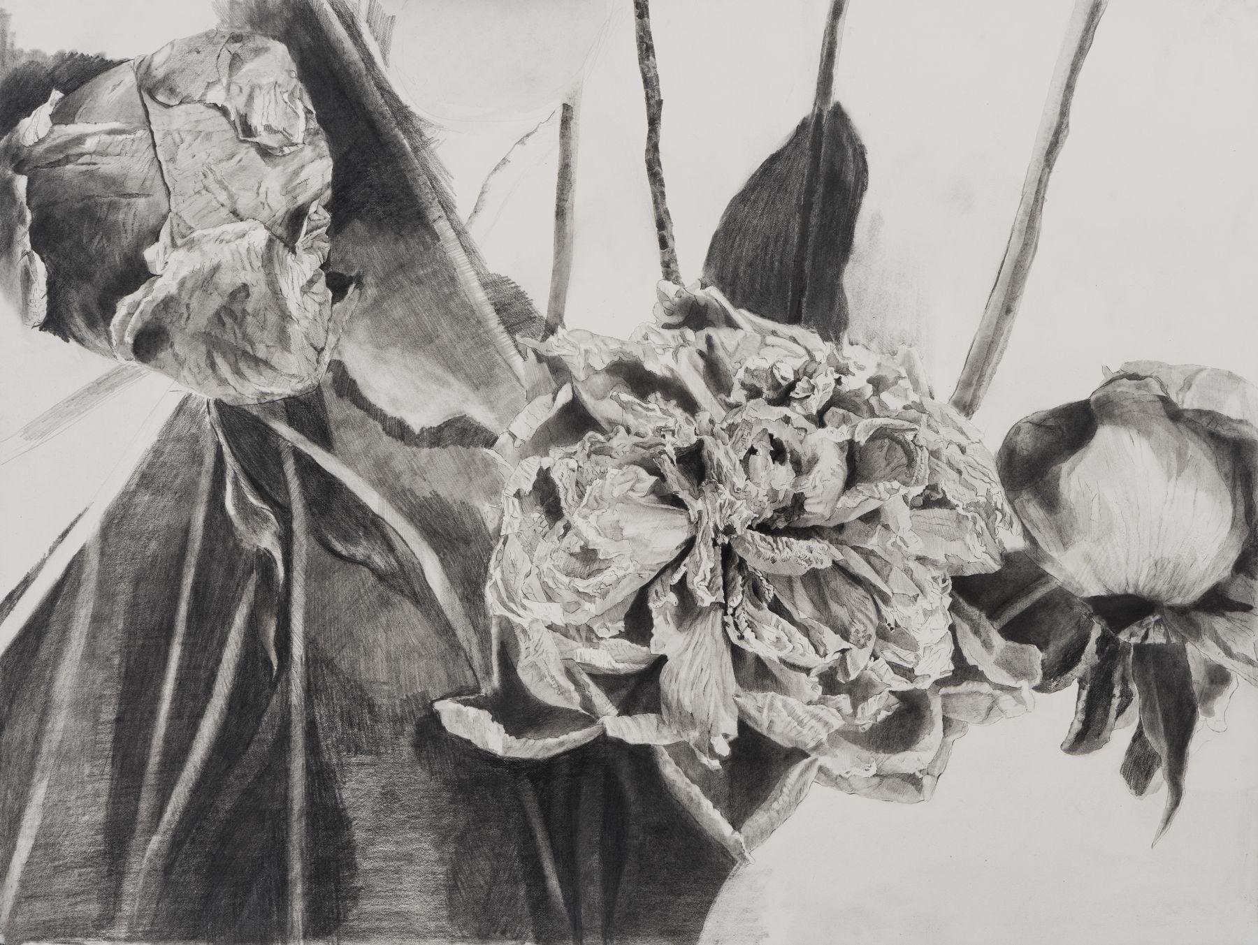 Dead Flowers, graphite on paper, 18 x 24 in, JR036