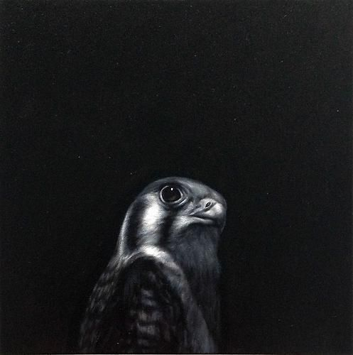 Kestral, 2012, oil on canvas, 12 x 12 inches