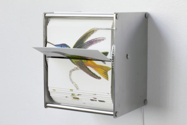 Juan Fontanive, Ornithology I