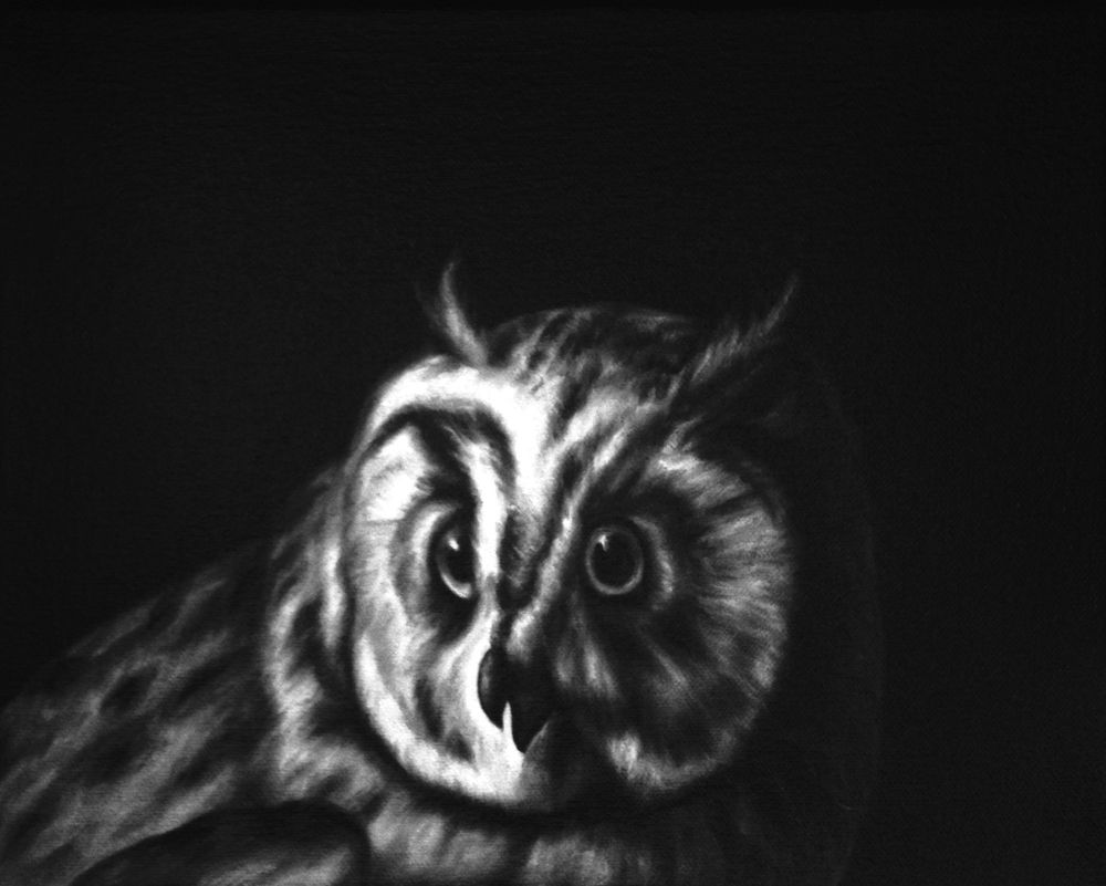 Shelley Reed, Owl (after Duranti), 2013