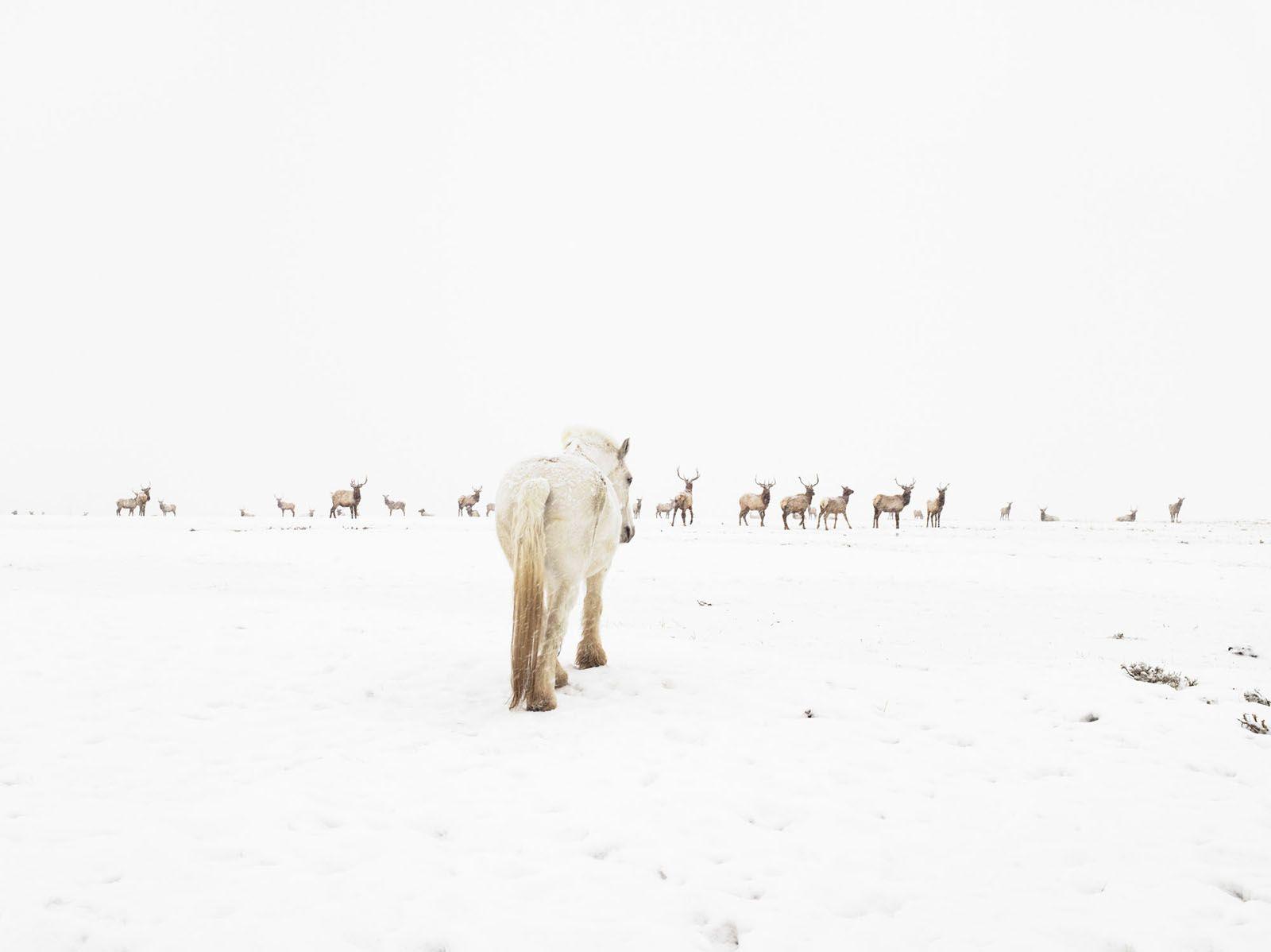 LUCAS FOGLIA, Jewett Elk Feedground, Merna, Wyoming, 2010