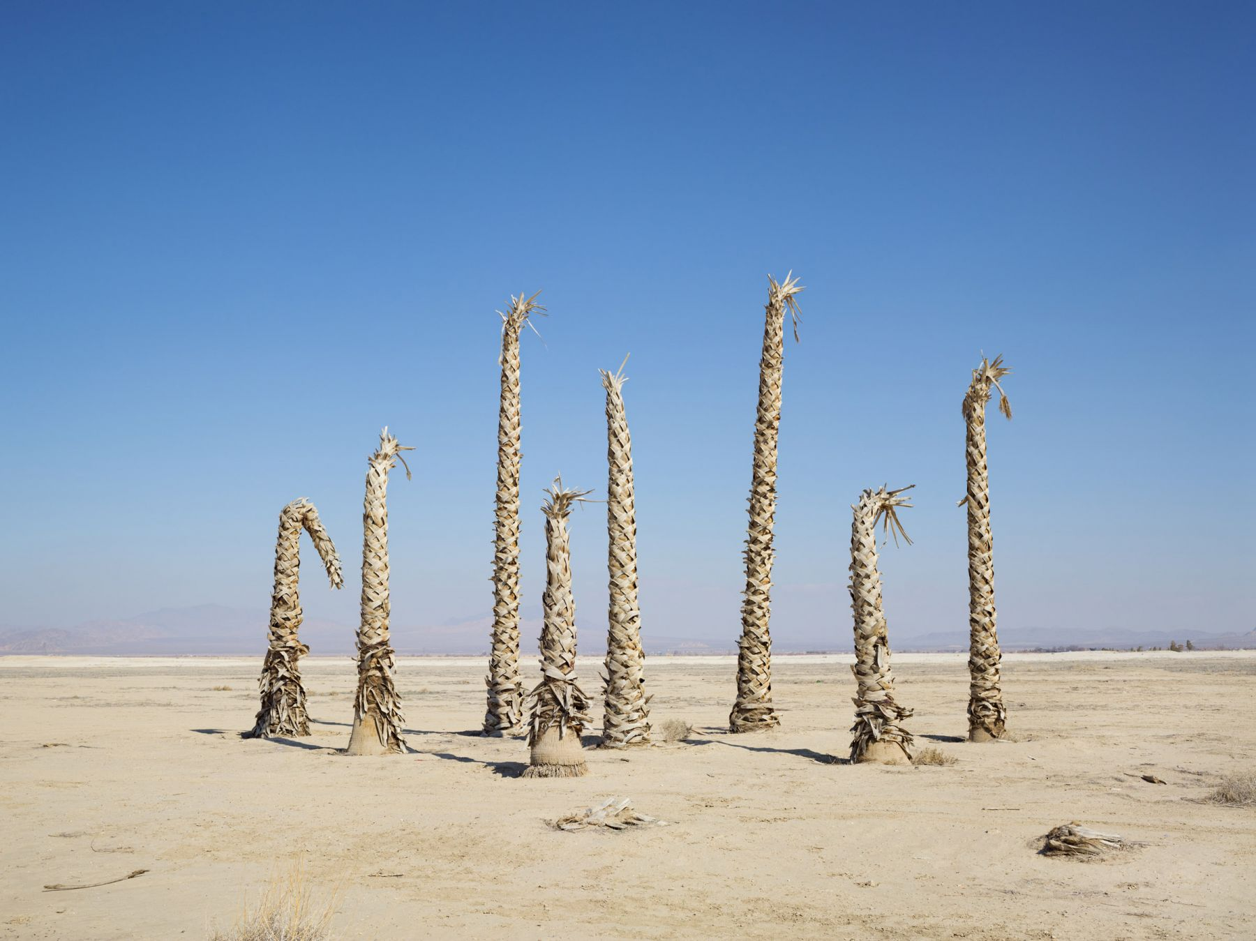LUCAS FOGLIAPalm Trees without Water, California, 2014