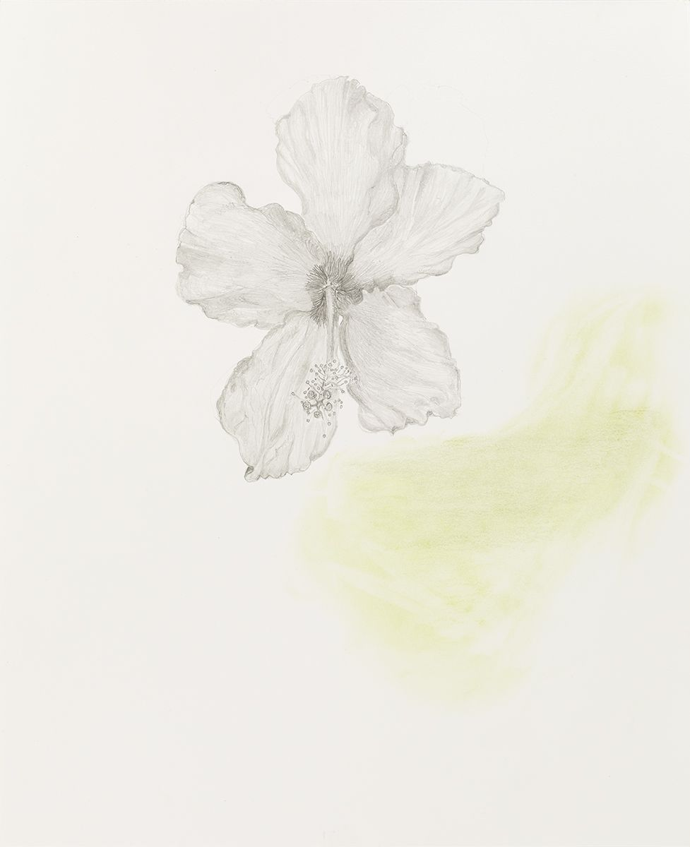 Mayo Thompson Hibiscus, 2015 Pencil on paper Paper: 39 7/8 x 30 inches (101.3 x 76.2 cm) Frame: 44 1/8 x 34 1/4 inches (112.1 x 87 cm)