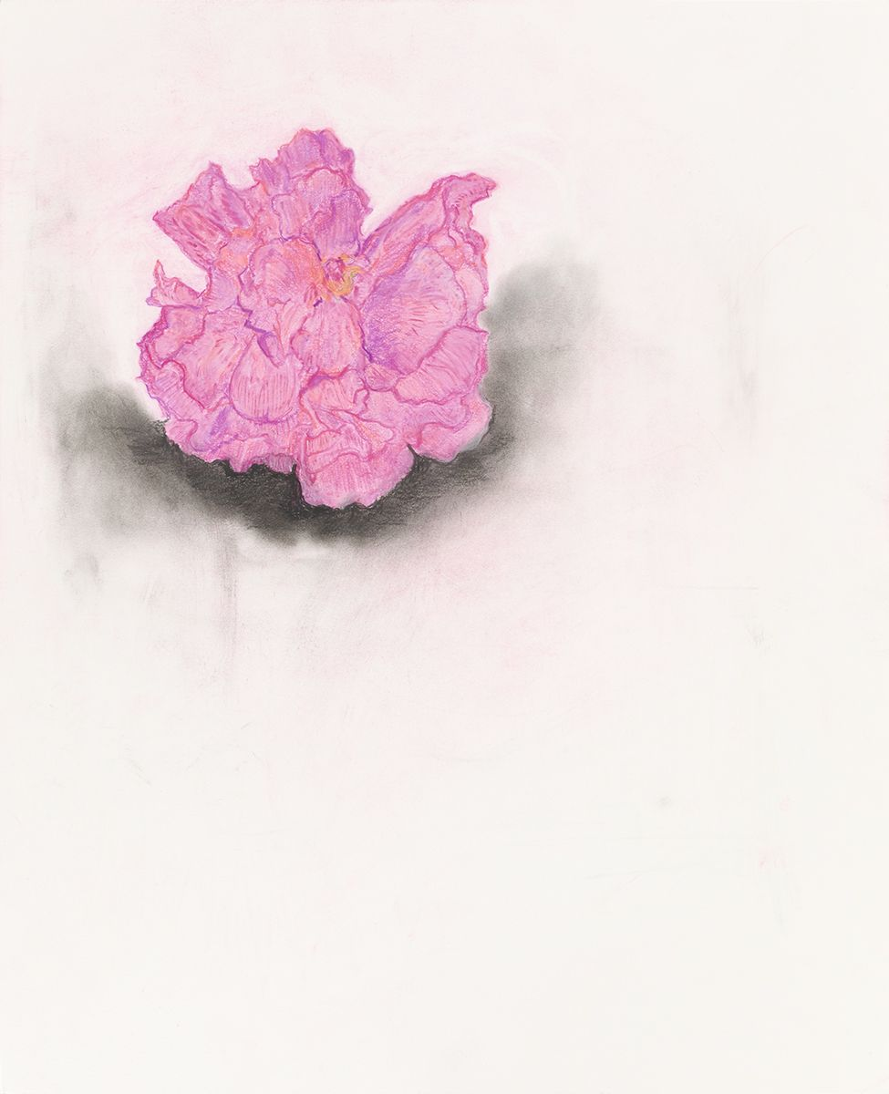 Mayo Thompson Hibiscus, 2015 Colored pencil on paper Paper: 17 x 13 7/8 inches (43.2 x 35.2 cm) Frame: 21 15/16 x 15 15/16 inches (55.7 x 40.5 cm)