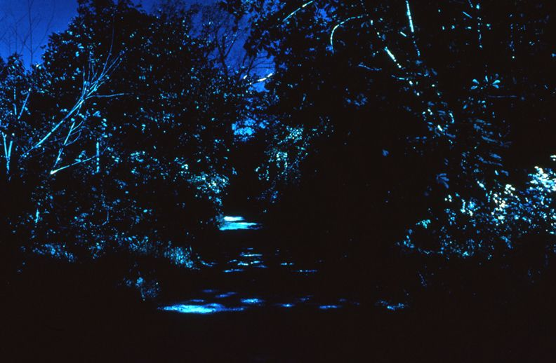 Day for Night, Christiania (Path/The Ramparts), 1996 c-print 26 x 38 1/2 inches, edition of 5