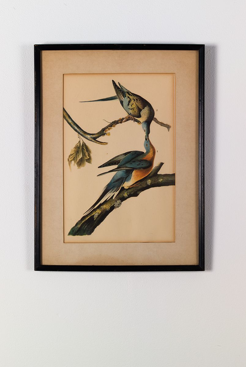 Gedi Sibony, Migratorius, 2013, Matted artwork in frame, 14 x 10 1/2 inches (35.6 x 26.7 cm)
