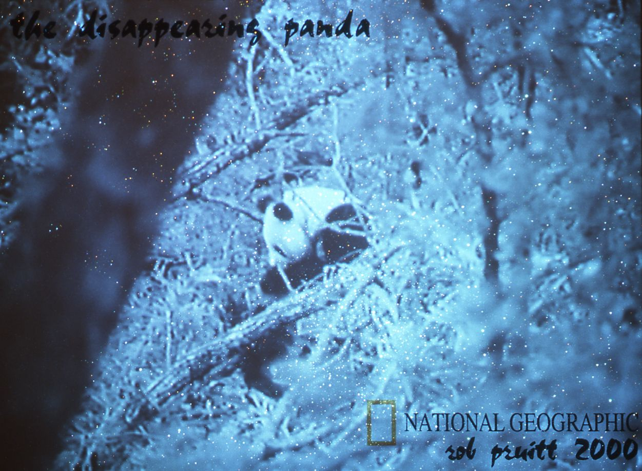 "Rob Pruitt, The Disappearing Panda, 2000, glitter and oil on canvas, ""Save the Panda National Geographic Home Video"", (1984) vhs tape, 60:00min, 108 x 80 inches"