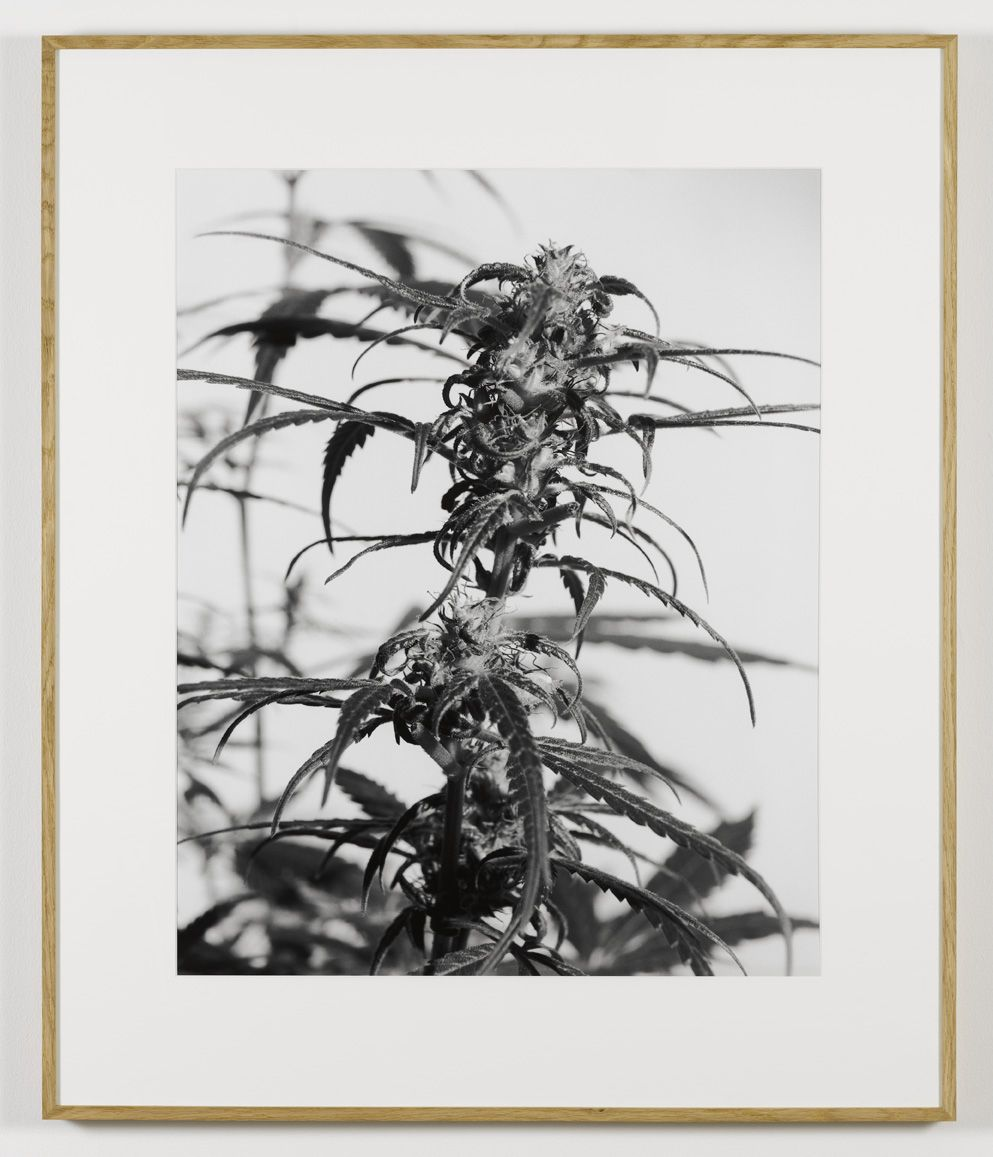 From the Secret Garden of Sleep, 2008, Silver gelatin print