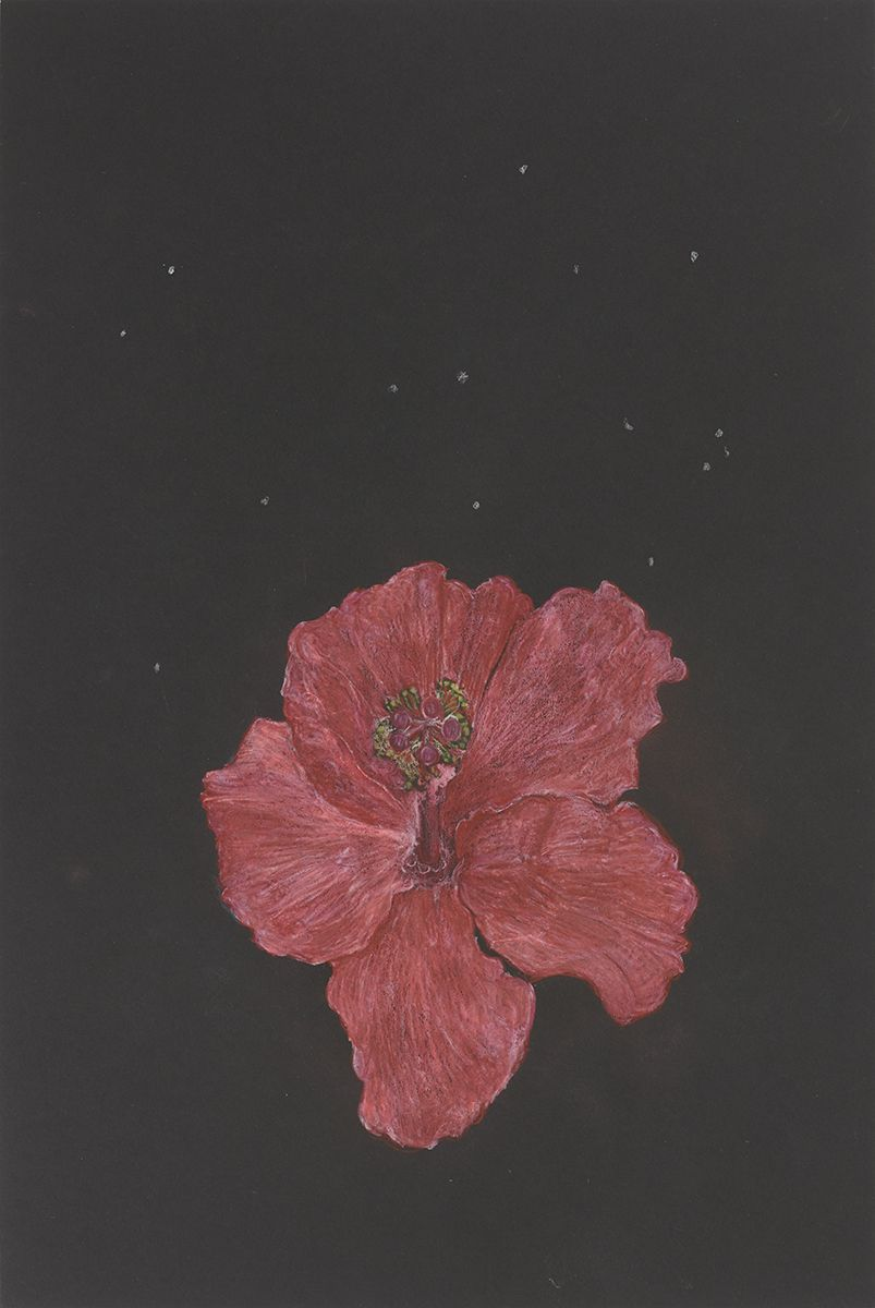 Mayo Thompson Hibiscus, 2015 Colored pencil on paper Paper: 18 x 12 inches (45.7 x 30.5 cm) Frame: 24 15/16 x 18 15/16 inches (63.3 x 48.1 cm)