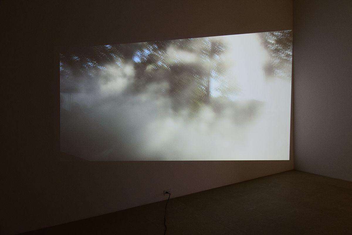 Fog, 2014