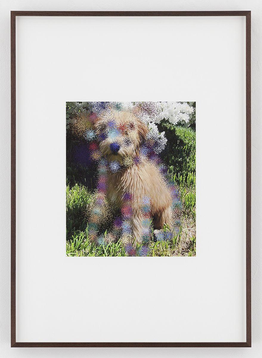 Hilary Lloyd  Blossom Dog, 2017  Archival pigment print  Framed: 33 3/4 x 24 x 1 7/8 inches  (85.7 x 61 x 4.8 cm)  Unique