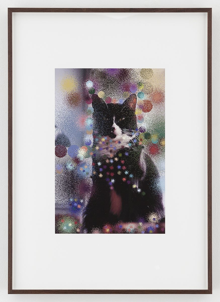 Hilary Lloyd  Sailor Cat, 2017  Archival pigment print  Framed: 33 3/4 x 24 x 1 7/8 inches  (85.7 x 61 x 4.8 cm)  Unique