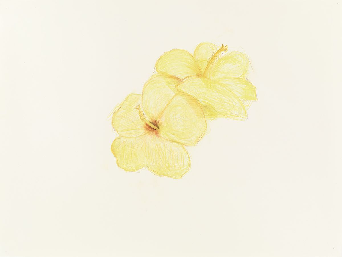 Mayo Thompson Two Hibiscuses, 2015 Colored pencil on paper Paper: 30 x 39 7/8 inches (76.2 x 101.3 cm) Frame: 34 3/16 x 44 1/8 inches (86.8 x 112.1 cm)