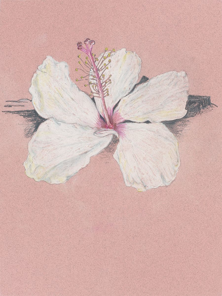 Mayo Thompson Hibiscus, 2015 Colored pencil on paper Paper: 12 x 9 inches (30.5 x 22.9 cm) Frame: 18 15/16 x 15 15/16 inches (48.1 x 40.5 cm)
