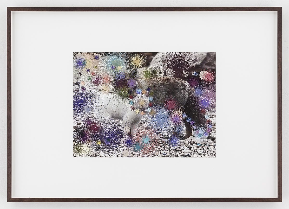 Hilary Lloyd  Cat and Fox, 2017  Archival pigment print  Framed: 33 3/4 x 24 x 1 7/8 inches  (85.7 x 61 x 4.8 cm)  Unique