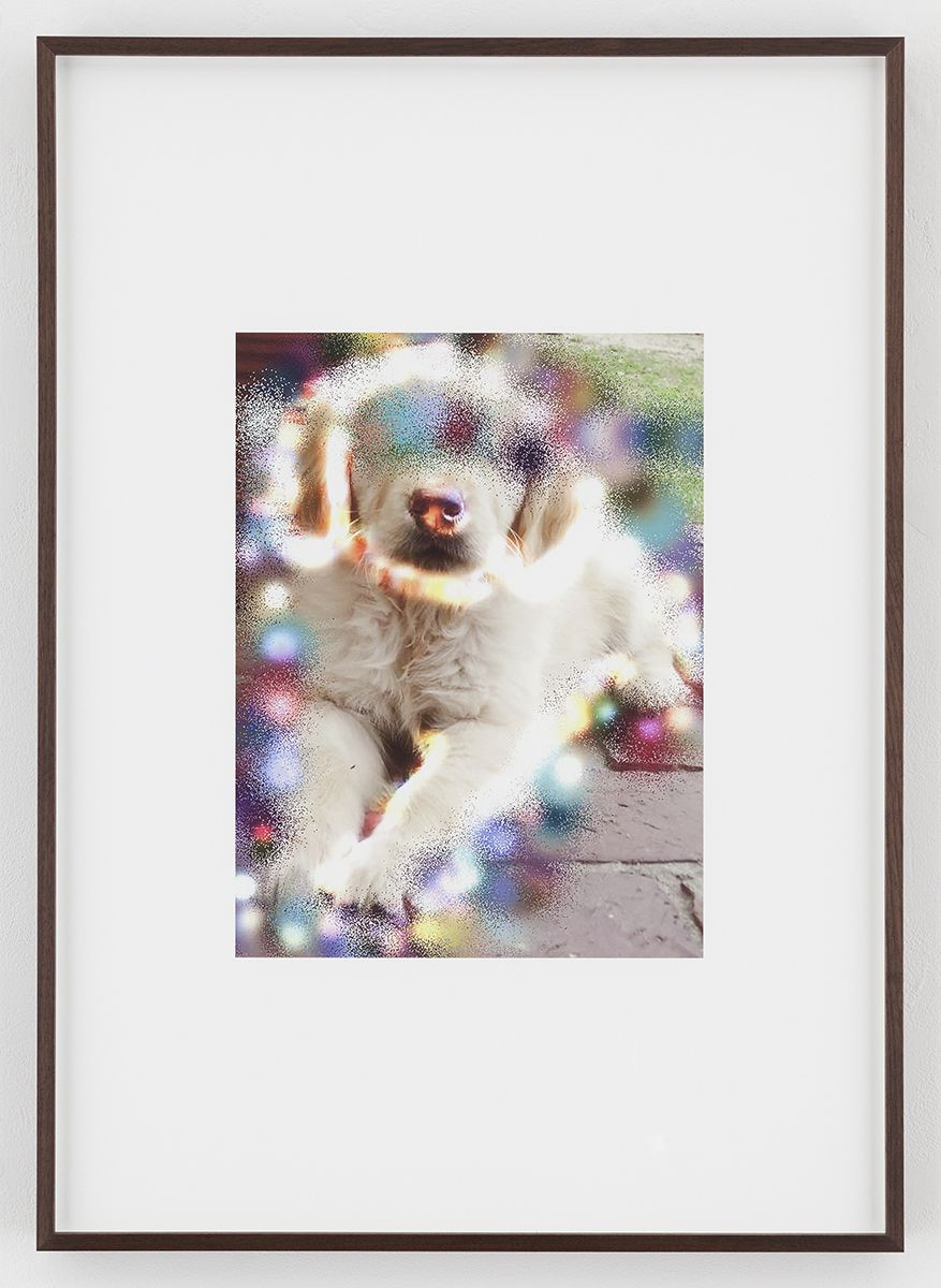 Hilary Lloyd  Sphinx Dog, 2017  Archival pigment print  Framed: 33 3/4 x 24 x 1 7/8 inches  (85.7 x 61 x 4.8 cm)  Unique