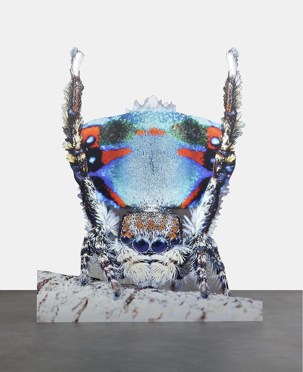 Katja Novitskova Approximation (peacock spider 2), 2016 Digital print on aluminum, cutout display 67 x 55 x 13 3/4 inches (170 x 140 x 35 cm)