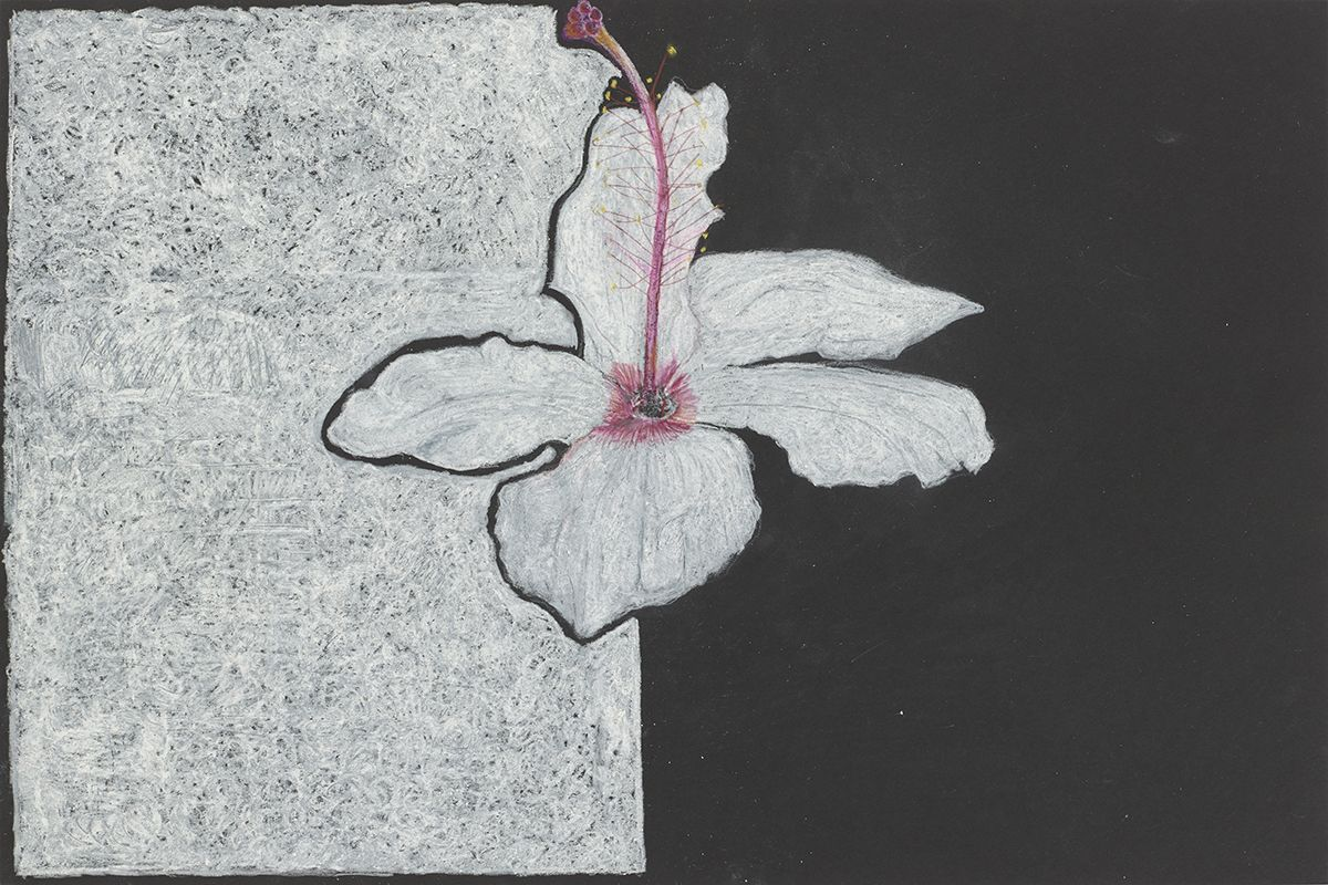 Mayo Thompson Hibiscus, 2015 Colored pencil on paper Paper: 12 x 17 inches (30.5 x 45.7 cm) Frame: 16 1/2 x 22 1/2 inches (41.9 x 57.2 cm)