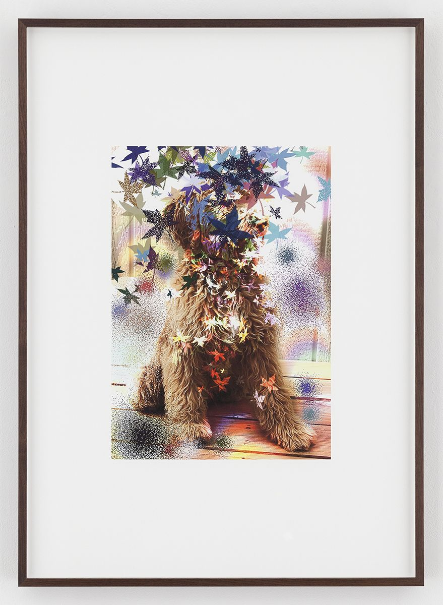 Hilary Lloyd  Leaf Dog, 2017  Archival pigment print  Framed: 33 3/4 x 24 x 1 7/8 inches  (85.7 x 61 x 4.8 cm)  Unique