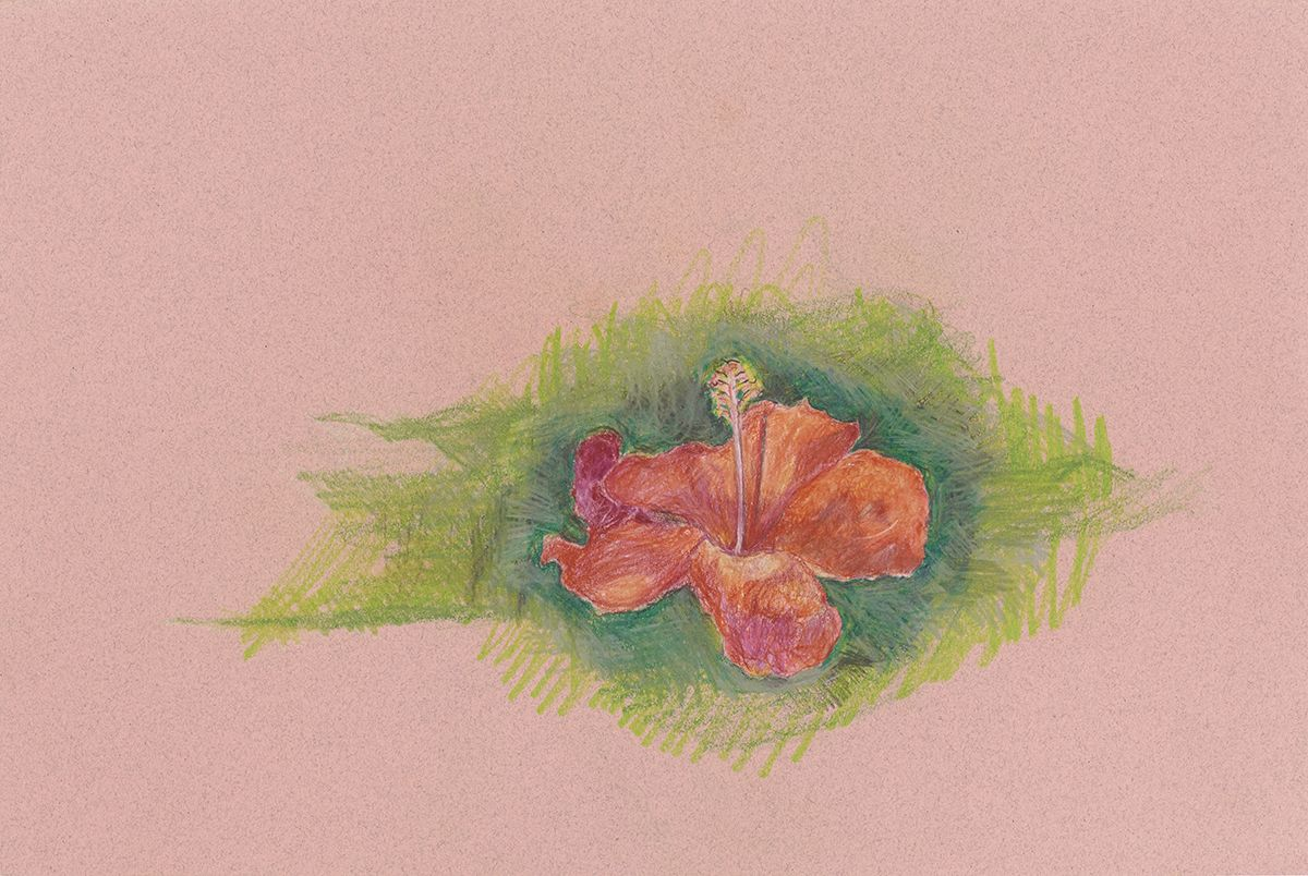 Mayo Thompson Hibiscus, 2015 Colored pencil on paper Paper: 12 x 18 inches (30.5 x 45.7 cm) Frame: 17 x 23 inches (43 x 58.3 cm )