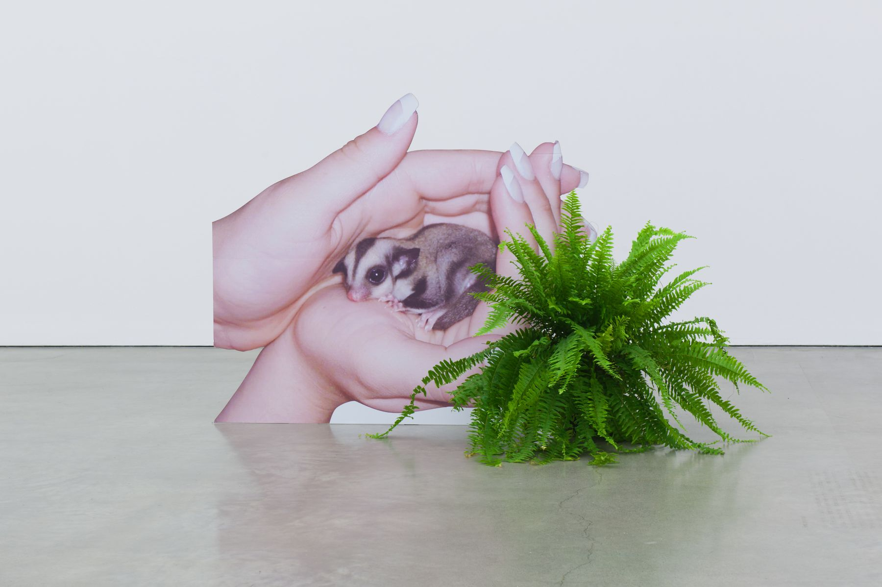 Innate Disposition 2, 2012 digital print plastic cutout displays 120 x 150 cm