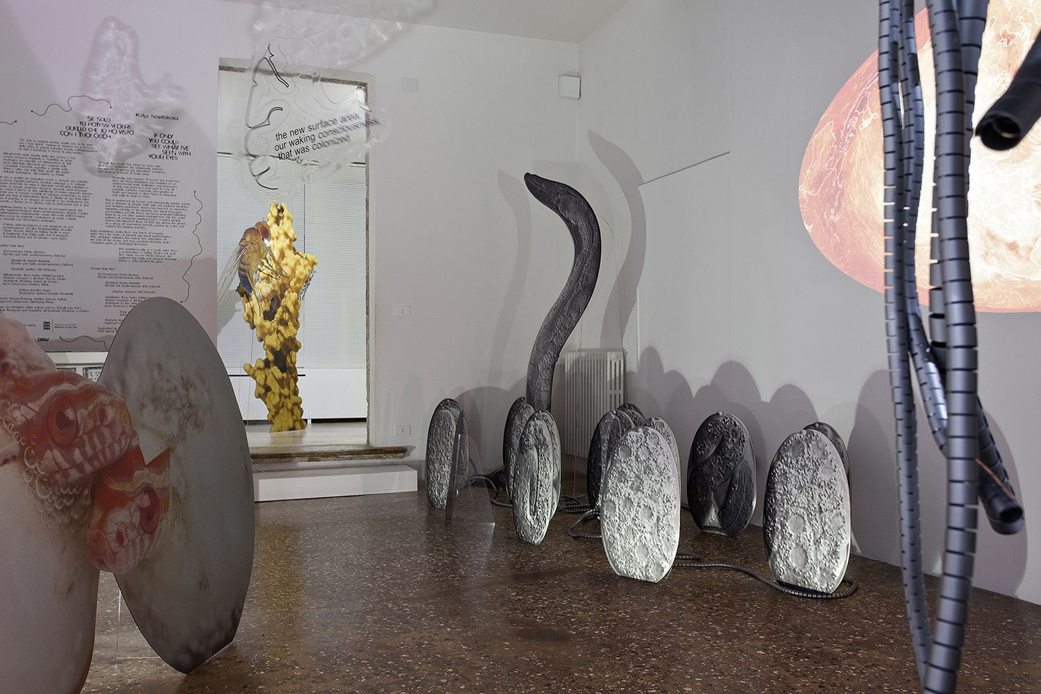 Katja Novitskova, Installation view, If Only You Could See What I've Seen With Your Eyes, 57th Venice Biennale, Estonian Pavilion, Venice, 2017