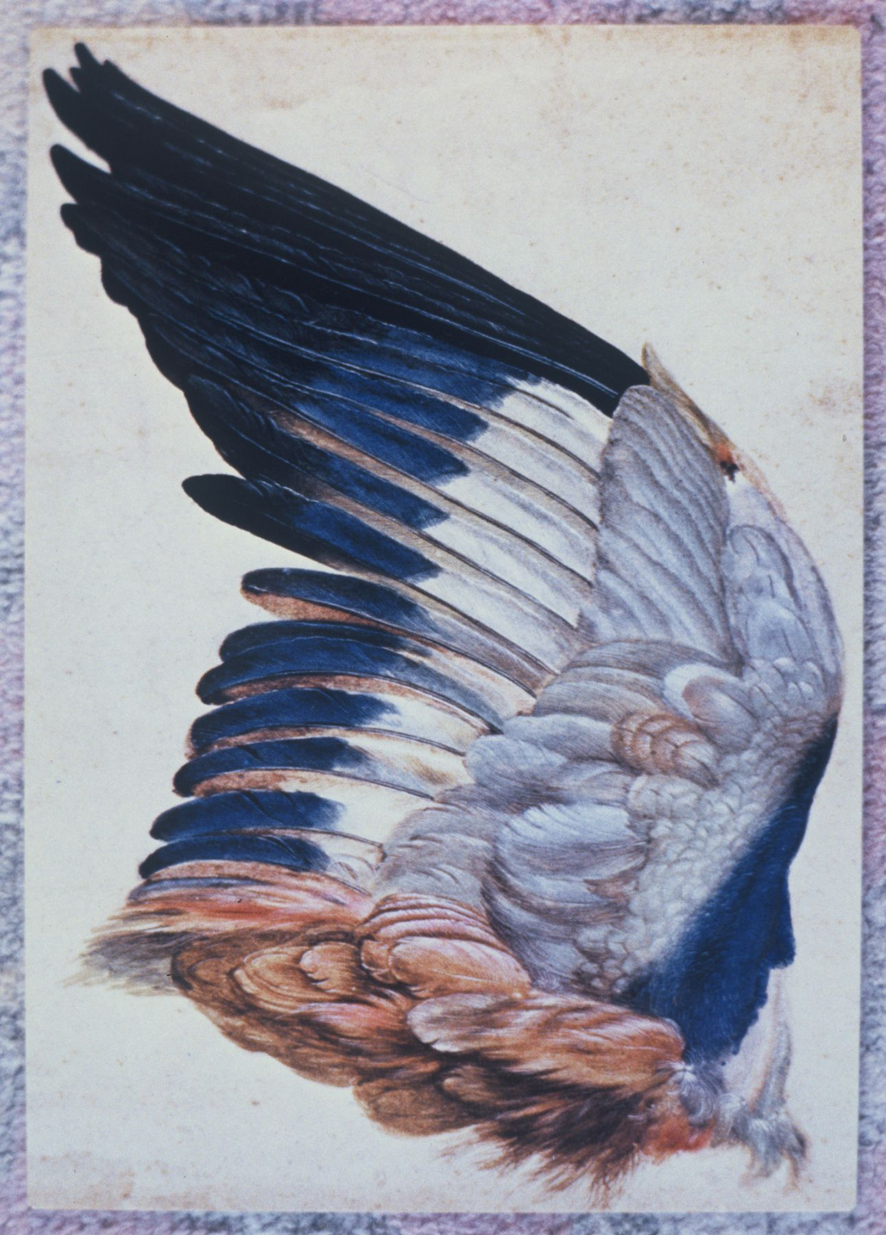 Study Dürer, 2007, C-print