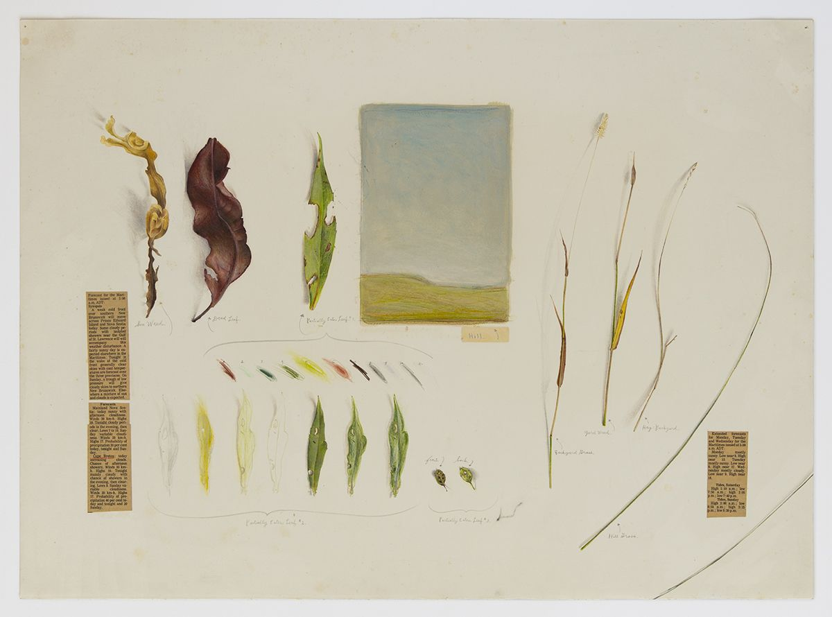 Candy Jernigan, Cape Breton Landscape, n.d.,  Pencil and collage on paper,  Image: 19 x 26 inches (48.3 x 66 cm),  Frame: 23 x 29 7/8 x 1 1/2 inches (58.4 x 75.9 x 3.8 cm)