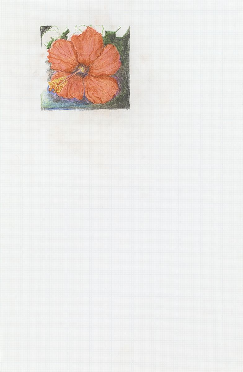Mayo Thompson Hibiscus, 2015 Colored pencil on paper Paper: 17 x 11 inches (43.2 x 27.9 cm) Frame: 19 15/16 x 13 15/16 inches (50.6 x 35.4 cm)
