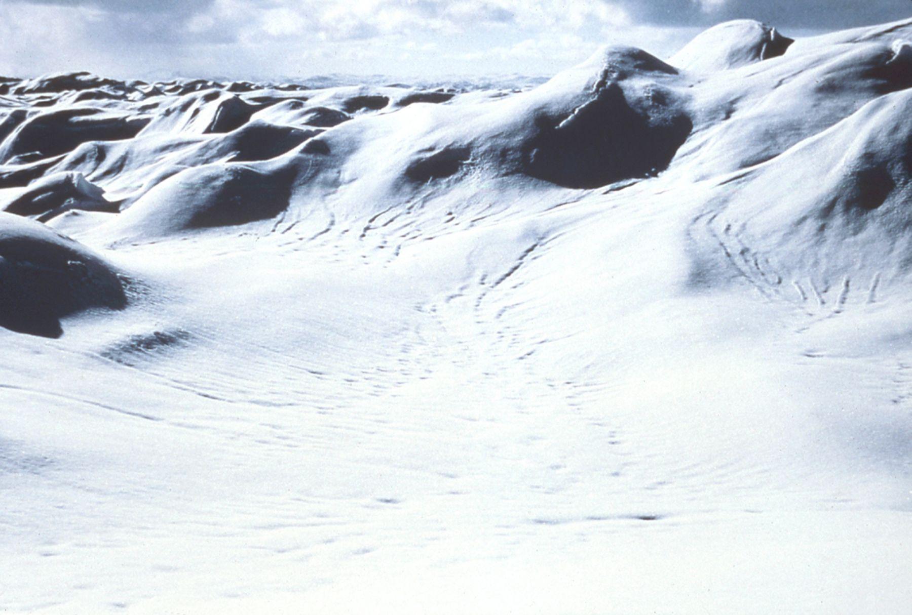Nordenskiold & the Icecap,1999-2000