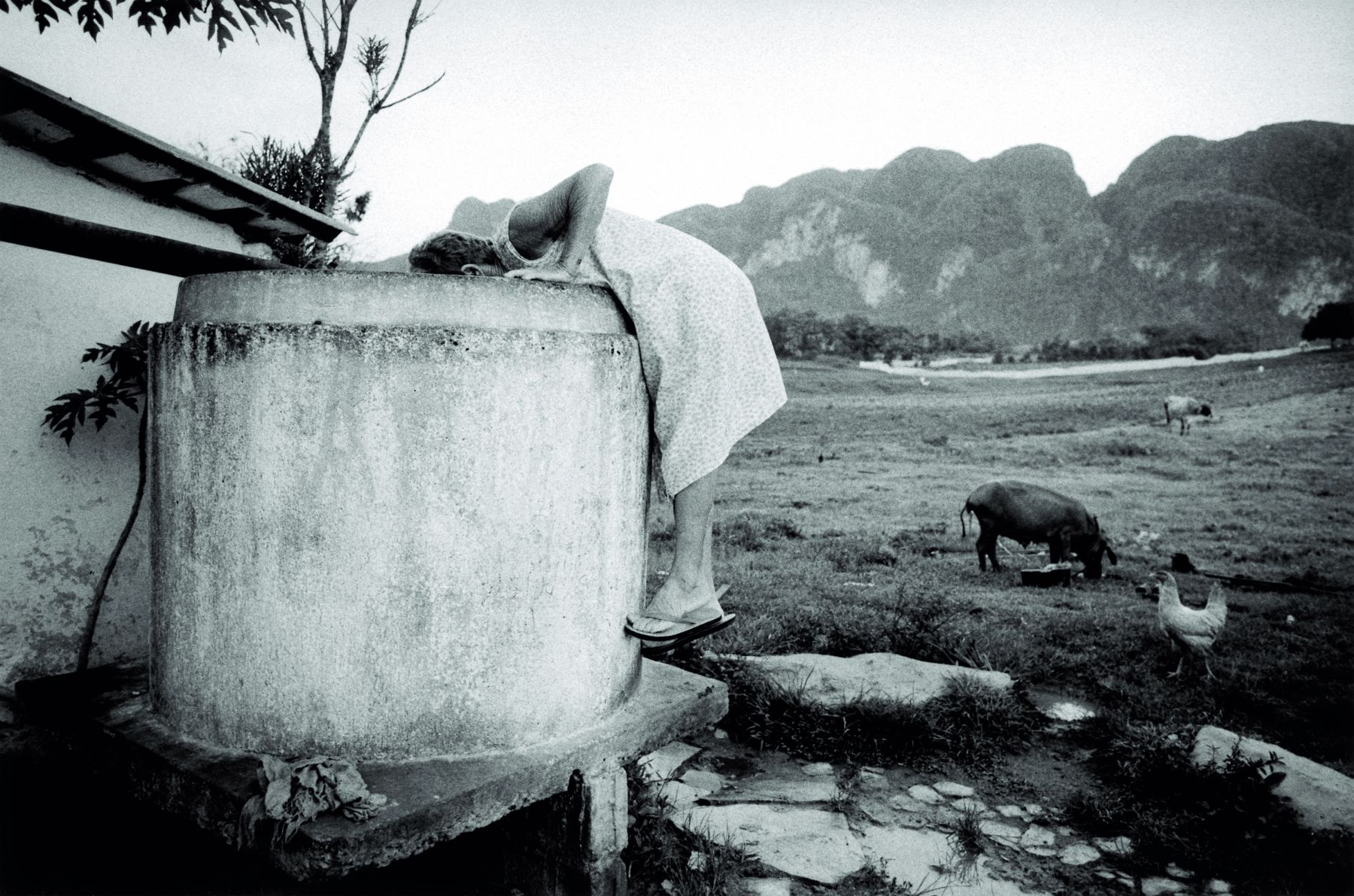 SUSAN S. BANK, Ana in Tanque, 2002-2007
