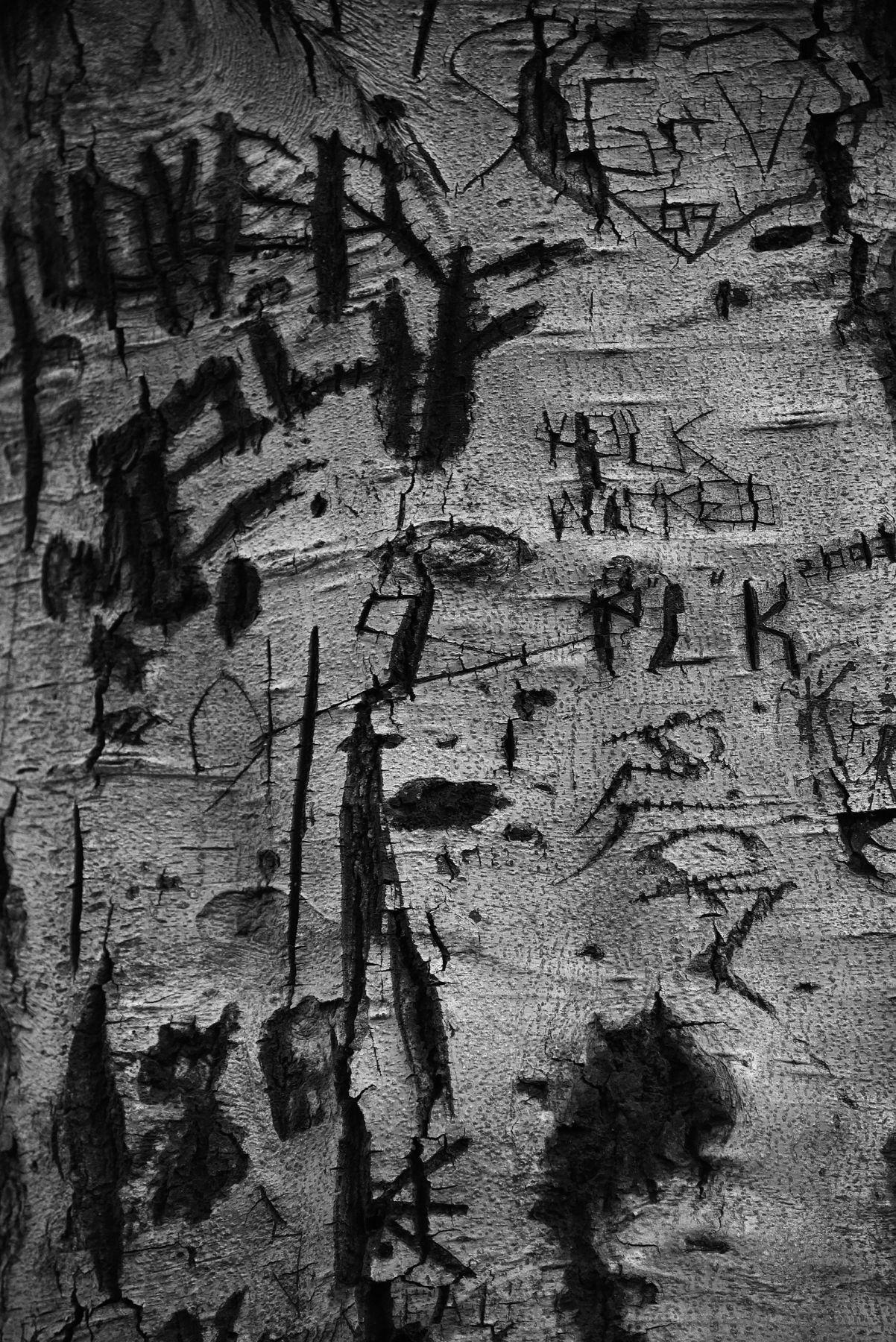 LAURA PARKER Tree 1881