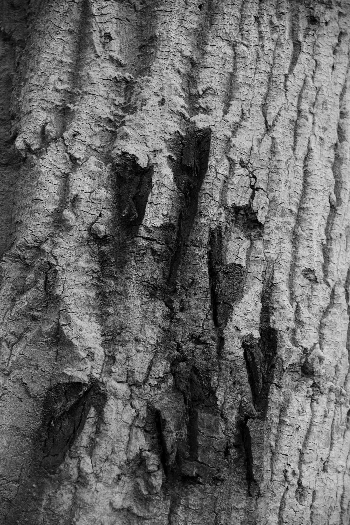 LAURA PARKER Tree 2113