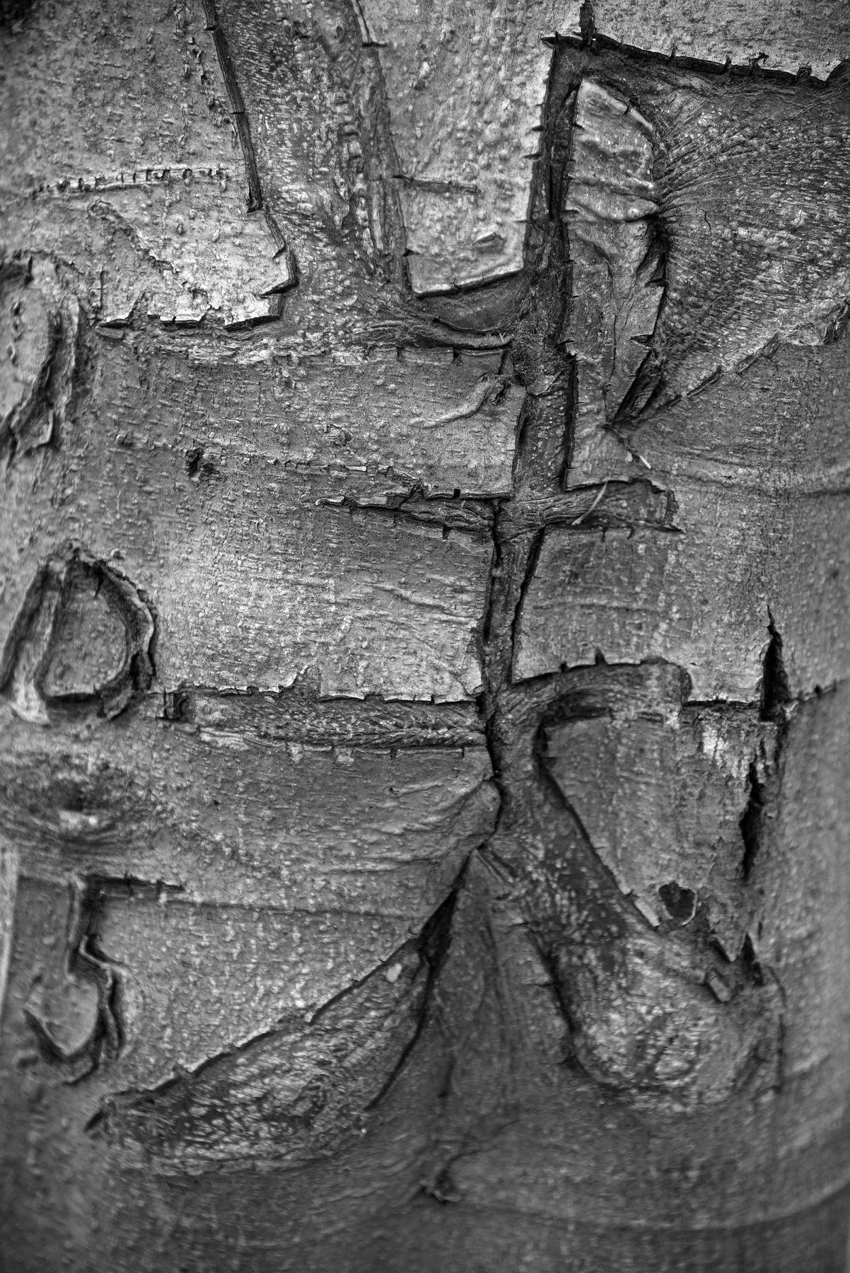 LAURA PARKER Tree 1739
