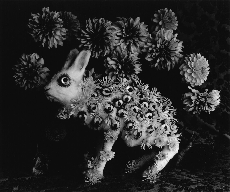 Michiko Kon rabbit