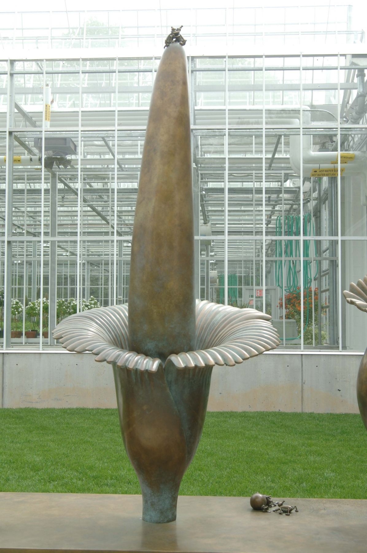 Amorphophallus Titanum, New York Botanical Garden, Bronx, New York