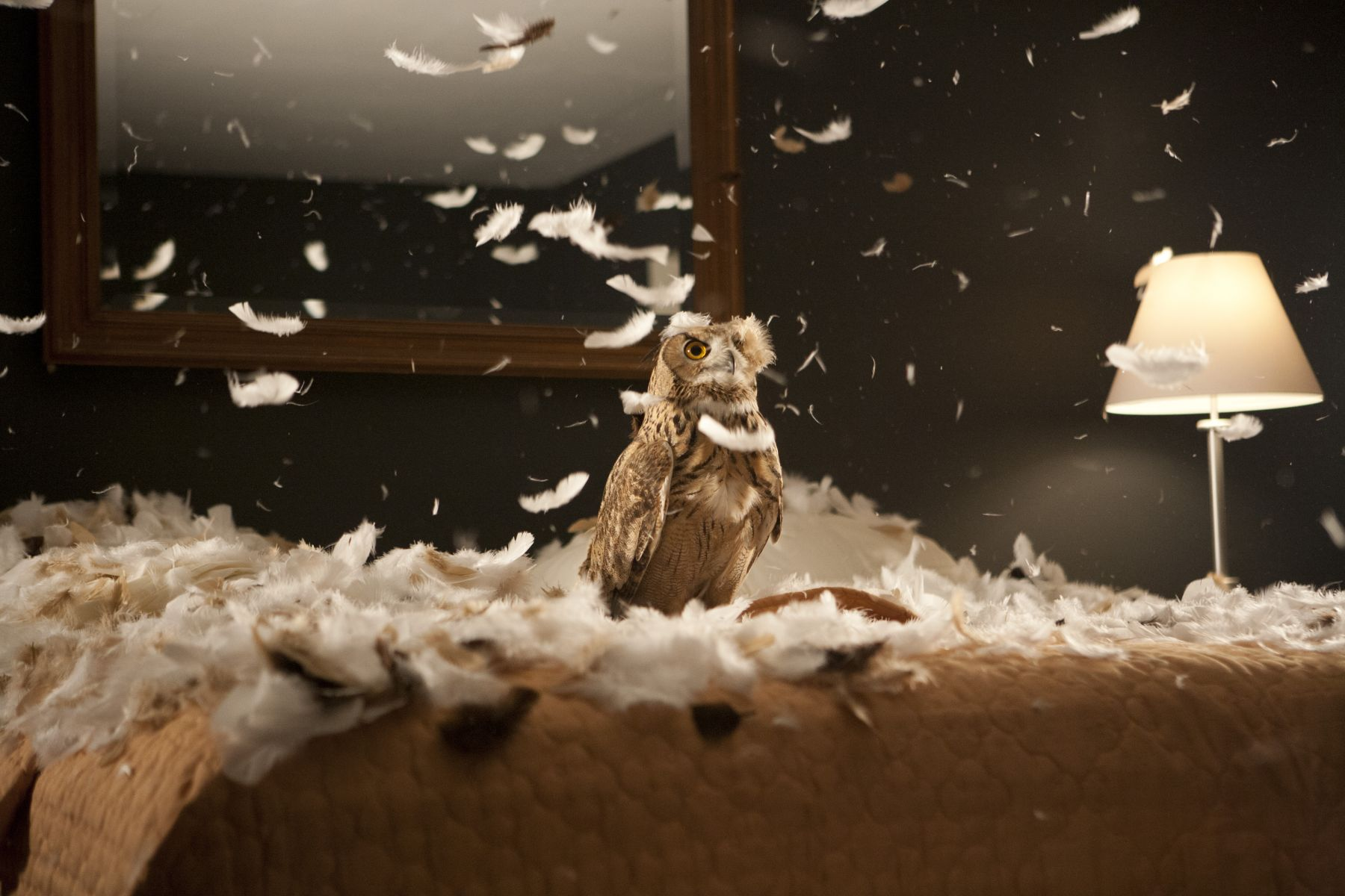 Doug Aitken - migration
