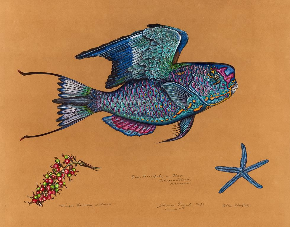 Blue Parrotfishe, 2013, Watercolor and Mixed Media on Tea-stained Paper, 27 x 30 inches