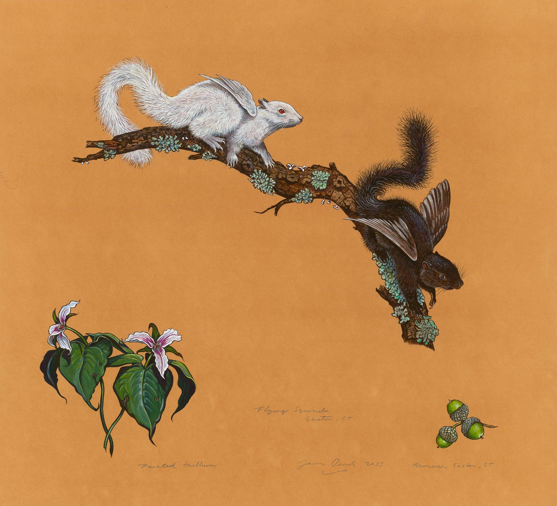 Flying Squirrels, 2013, Watercolor, gouache, colored pencil, and powdered mica on tea-stained paper, 27 3/4 x 30 inches