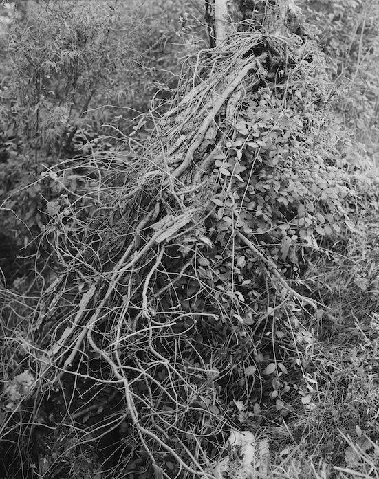Ying Jheng Zheng, Seeping Through, 2016-17, BARD x HGG, Howard Greenberg Gallery, 2019